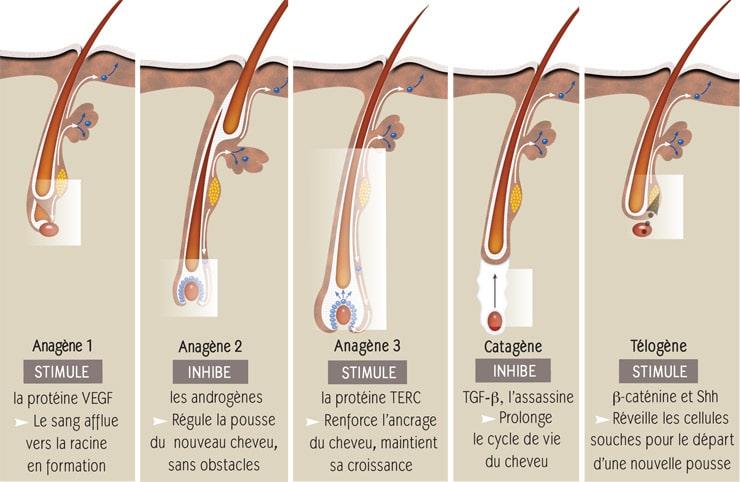 action-clauderer-sur-cycle-capillaire