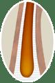 cheveu-racine-saine