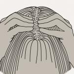 massage-pinCEMENT-crepu