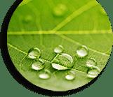plante-anti-chute-cheveux